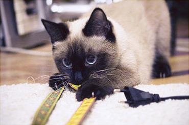 Кошка любит драть ткань, за которую цепляются когти